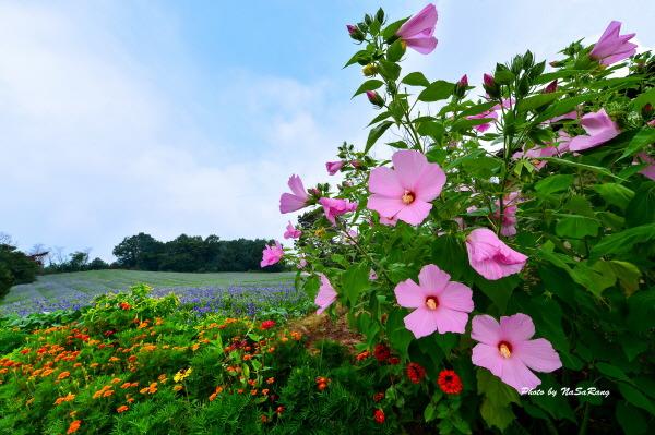 꽃이있는풍경